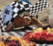 Черепахи-гонщики на Zoopolis 500
